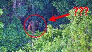 Download Fotografer ini tak sengaja menangkap pemandangan mengejutkan di pedalaman hutan Video