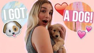 Download I GOT A DOG! | Avrey Ovard Video