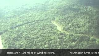Download Rainforest Deforestation and its Effects Video