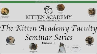 Download The Kitten Academy Faculty Seminar Series Episode 1 Video