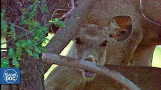 Download Keoladeo Ghana National Park - Full Documentary Video
