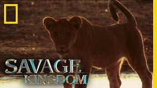 Download Home is Where the Pride Is | Savage Kingdom Video