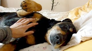 Download Old Shelter Dog Rescued Feels Love & Kindness For The First Time - Howl Of A Dog Video