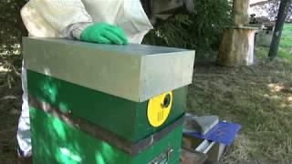 Download Booster une petite colonie d'abeilles Video