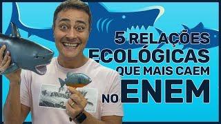 Download 5 RELAÇÕES ECOLÓGICAS que mais caem no ENEM Video