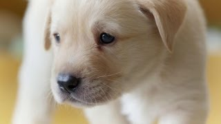 Download Puppy opens its eyes for the first time | Puppy Senses | Secret Life of Dogs | Earth Video
