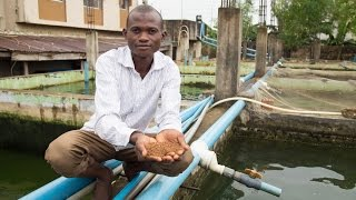 Download Nigeria's Fish Farmers Take New Paths to Profitability Video