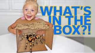 Download EXTREME WHAT'S IN THE BOX CHALLENGE!!! Video
