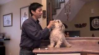 Download How To Brush Your Dog's Teeth And Train Dogs To Cooperate Video