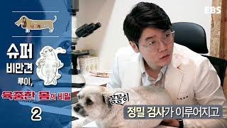 Download 세상에 나쁜 개는 없다 - 슈퍼 비만견 루이, 육중한 몸의 비밀 #002 Video