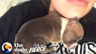 Download 1-Day-Old Puppy Grows Up To Have The CRAZIEST Ears | The Dodo Little But Fierce Video