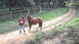 Download egua chucra Video