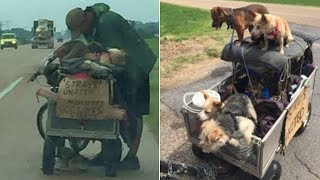 Download A Homeless Man Was Found With A Cart Full Of Dogs. What They Did About It Will Touch Your Heart Video