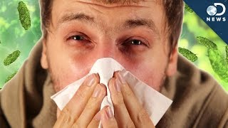 Download Cold vs. Flu: What's The Difference? Video