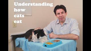 Download Understanding how cats eat Video