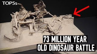 Download 5 Most Amazing & Unbelievable Fossils Ever Unearthed Video