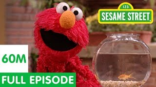 Download Elmo and Friends Find the Best Pet   Sesame Street Full Episode Video
