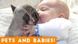 Download Most Adorable Animal and Baby Compilation 2018 | Funny Pet Videos Video