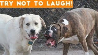 Download Try Not To Laugh At This Ultimate Funny Dog Video Compilation | Funny Pet Videos Video