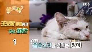 Download 고양이를 부탁해 - 초보맘 팡이,육아는 힘들어 #001 Video