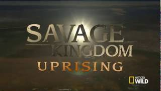 Download Savage Kingdom Uprising Season 2 Episode 1 CATS WILDLIFE PUBLIC DOMAIN Video