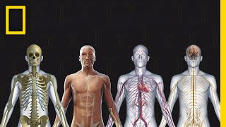 Download Human Body 101 | National Geographic Video