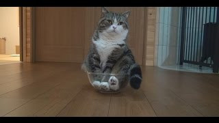 Download ボウルとねこ。-Mixing bowl and Maru.- Video
