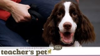 Download Loose-Leash Walking Inside | Teacher's Pet With Victoria Stilwell Video