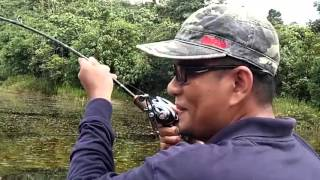 Download Awas!! Mancing Ikan Toman Joran Patah Jadi 3 Video
