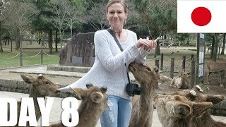 Download Nara Park & Kyoto. [Japan, Day 8] Video