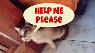 Download A story of a little stray kitten who cries with real tears | little stray kitten needs love & care Video