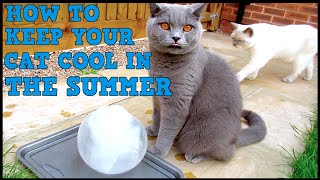 Download HOW TO KEEP YOUR CAT COOL IN SUMMER | CHRIS & EVE Video