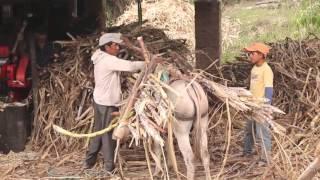 Download Elaboración de panela Artesanal/San Pedro/Loja-Ecuador Video