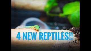 Download 4 NEW REPTILES UNBOXING! Video