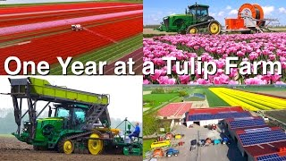 Download One Year at a Tulip Farm | Planting to Harvest | Dogterom Flowerbulbs | Colors of the Netherlands Video