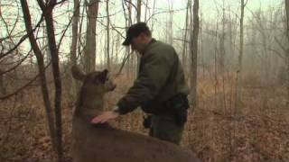 Download Indiana DNR's Robo-Deer Sting Operation | The Weekly Special Video