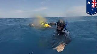 Download 스쿠버다이버, 해류에 의해 상어가 득실거리는 곳으로 끌려간 뒤에도 18시간 동안 생존 Video