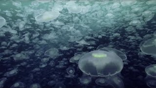 Download Open Ocean: 10 Hours of Relaxing Oceanscapes   BBC Earth Video