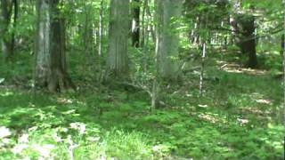 Download strange sound heard in the forest , Video