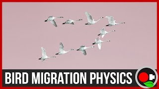 Download Physics of Bird Migration Video
