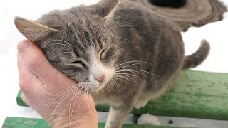 Download Two cats not want many food they want attention Video