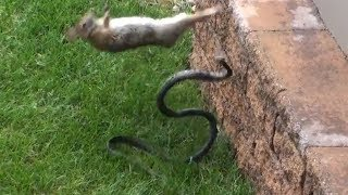 Download Kameraya Kaydedilmese Kimse İnanmazdı - Hayvanlar Tarafından Kurtarılan 8 Hayvan Video
