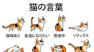 Download 飼い猫の気持ちがもっとよく分かるようになる5つのヒント Video