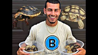 Download MY TORTOISE HAD BABIES!!! (ADORABLE) Video