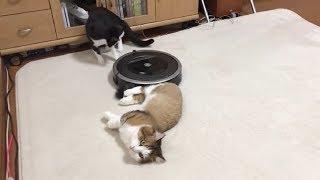 Download 尻尾を吸い込まれそうになって固まる猫 Video