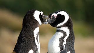 Download Animal Mating in the Wild | Love Nature Video
