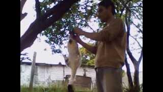 Download Pelando el pato 1 Video