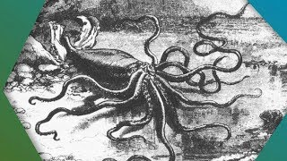 Download What Do We Know About The Elusive Giant Squid? - Earth Unplugged Video