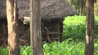 Download Stolen Childhood: Child Brides in Ethiopia Video