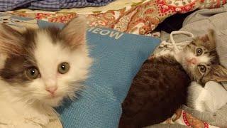 Download Kitten Close Up 2017-10-15 Video